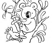 Coloriage Petit Koala sur les branches d'arbre