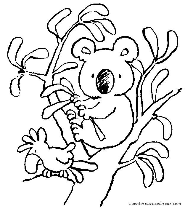 Coloriage et dessins gratuits Petit Koala sur les branches d'arbre à imprimer
