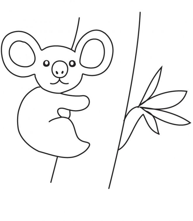 Coloriage Un Bébé Koala Dessin Gratuit à Imprimer