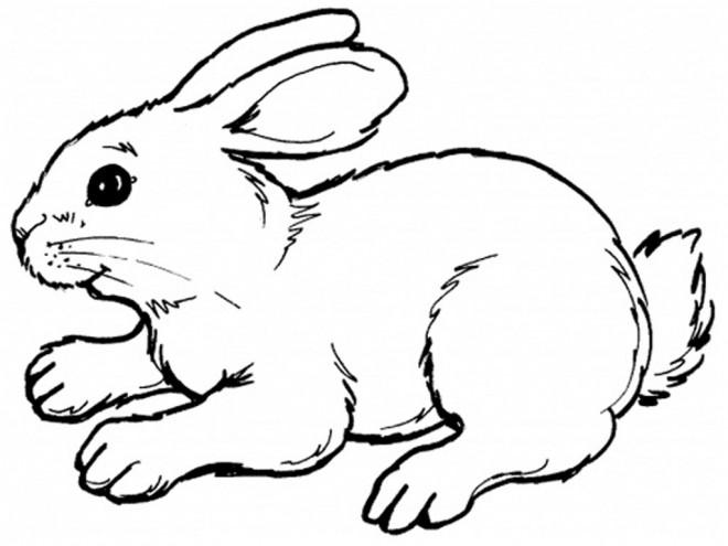Coloriage et dessins gratuits Lapin couleur à imprimer