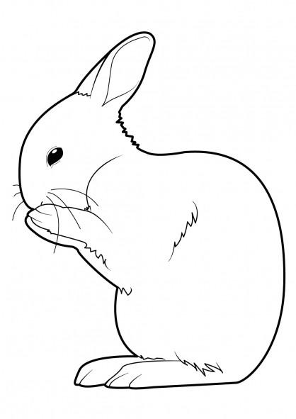 Coloriage lapin en train de se nettoyer dessin gratuit imprimer - Dessins lapins ...