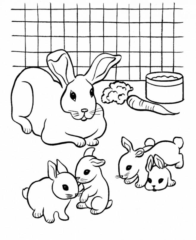 Coloriage Lapin et ses petits dessin