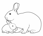 Coloriage Lapin et son bébé