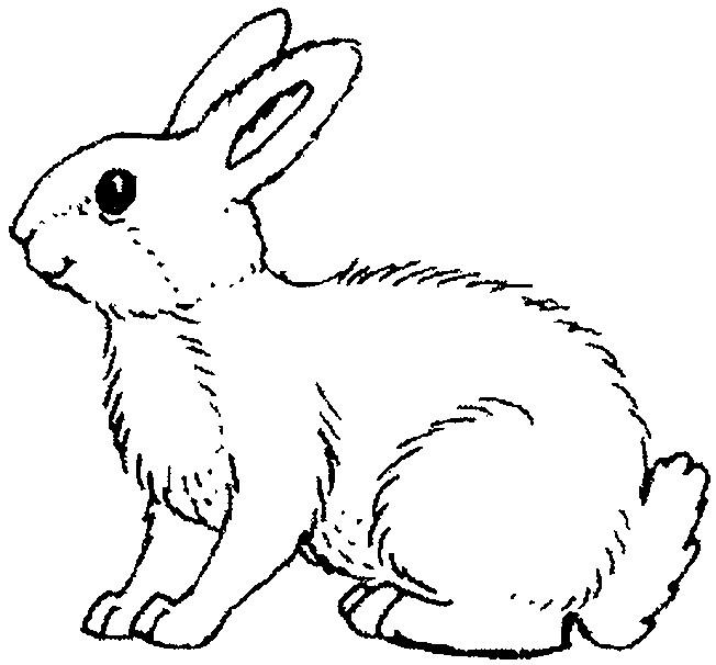 Coloriage et dessins gratuits Lapin sauvage à imprimer