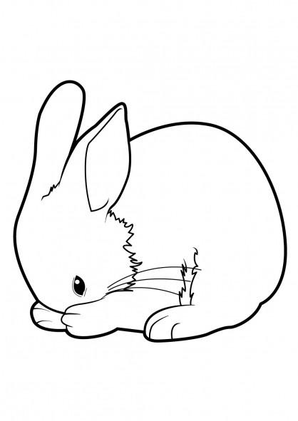 Coloriage et dessins gratuits Lapin se nettoie à imprimer