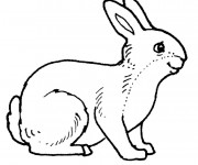 Coloriage Lapin souriant