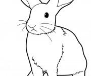Coloriage et dessins gratuit Lapin stylisé à imprimer