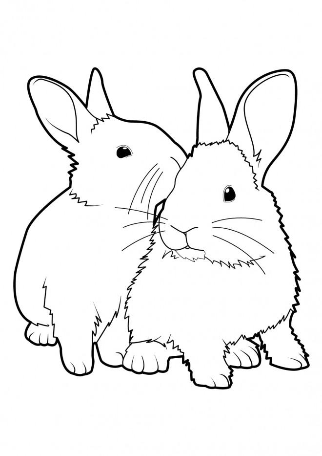 Coloriage lapins vecteur dessin gratuit imprimer - Dessin de lapin trop mignon ...