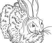 Coloriage Lièvre sauvage