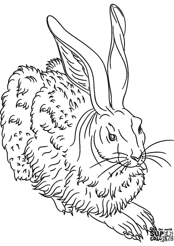 Coloriage et dessins gratuits Lièvre sauvage à imprimer