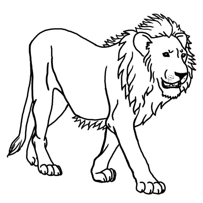 Coloriage et dessins gratuits Lion 16 à imprimer