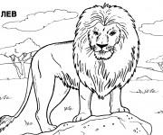 Coloriage et dessins gratuit Lion 23 à imprimer