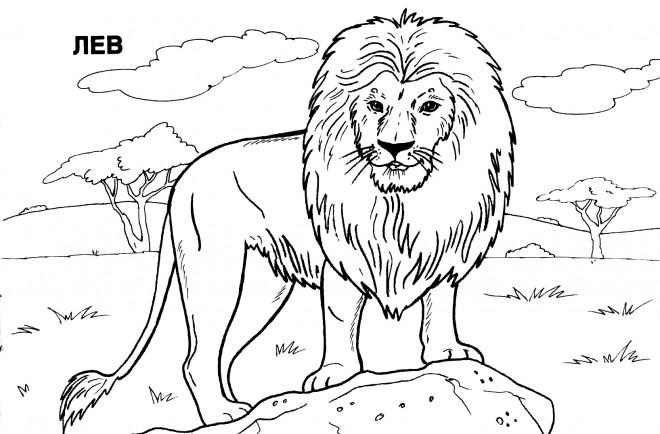 Coloriage Lion 23 Dessin Gratuit A Imprimer
