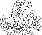 Coloriage Lion 24