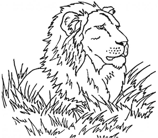 Coloriage Lion 24 Dessin Gratuit A Imprimer