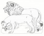 Coloriage Lion 27
