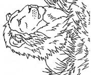 Coloriage Lion 30