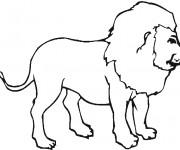 Coloriage Lion 31