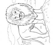 Coloriage Lion 33