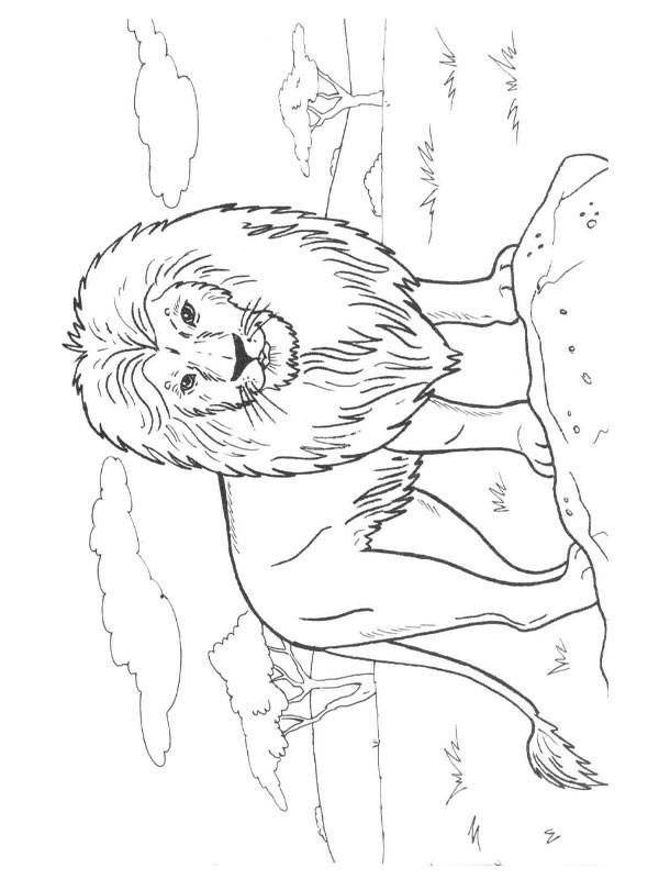 Coloriage et dessins gratuits Lion 33 à imprimer