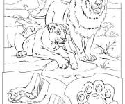 Coloriage Lion 47
