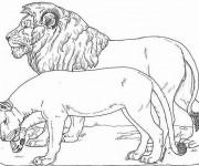 Coloriage et dessins gratuit Lion 6 à imprimer