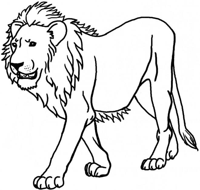 Coloriage Lion 8 Dessin Gratuit A Imprimer