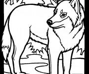Coloriage et dessins gratuit Loup 1 à imprimer