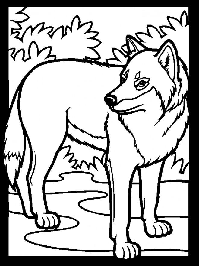 Coloriage et dessins gratuits Loup 1 à imprimer