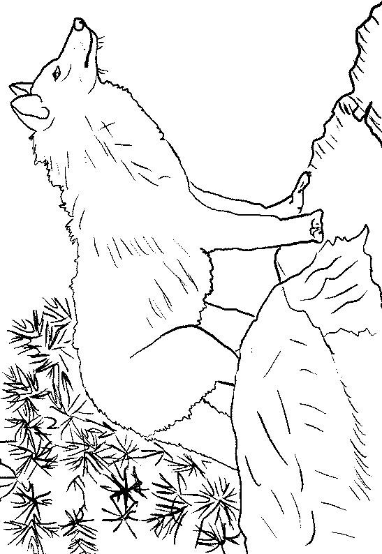 Coloriage Loup 11 Dessin Gratuit à Imprimer