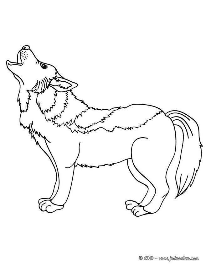 Coloriage et dessins gratuits Loup 13 à imprimer