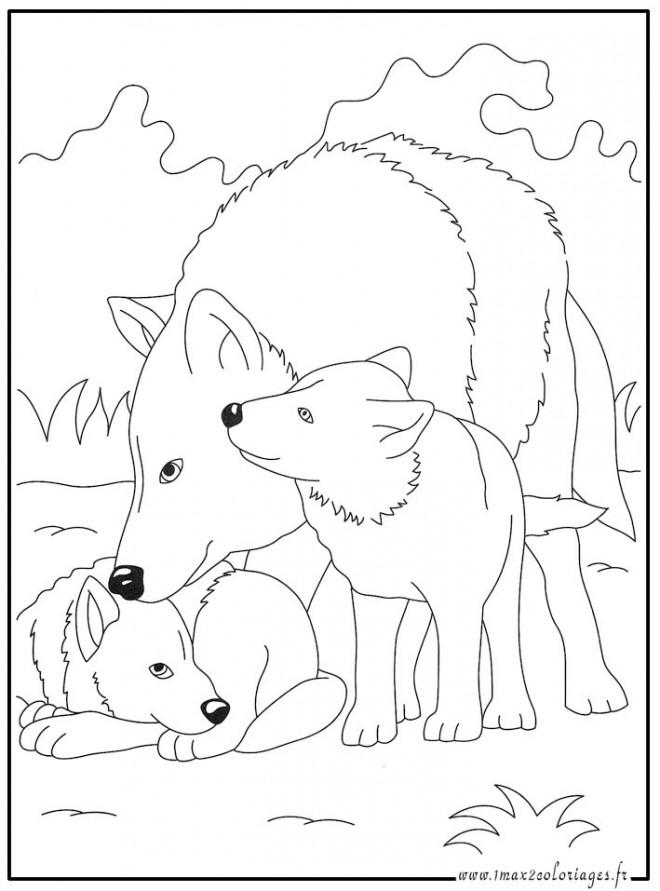 Coloriage Loup 15 Dessin Gratuit à Imprimer