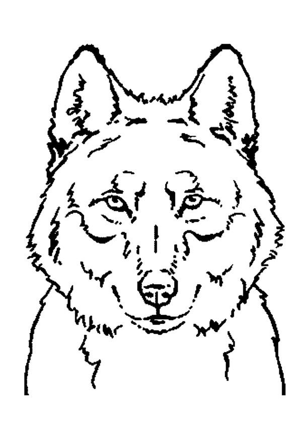 Coloriage et dessins gratuits Loup 2 à imprimer