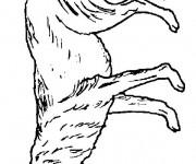 Coloriage Loup 22