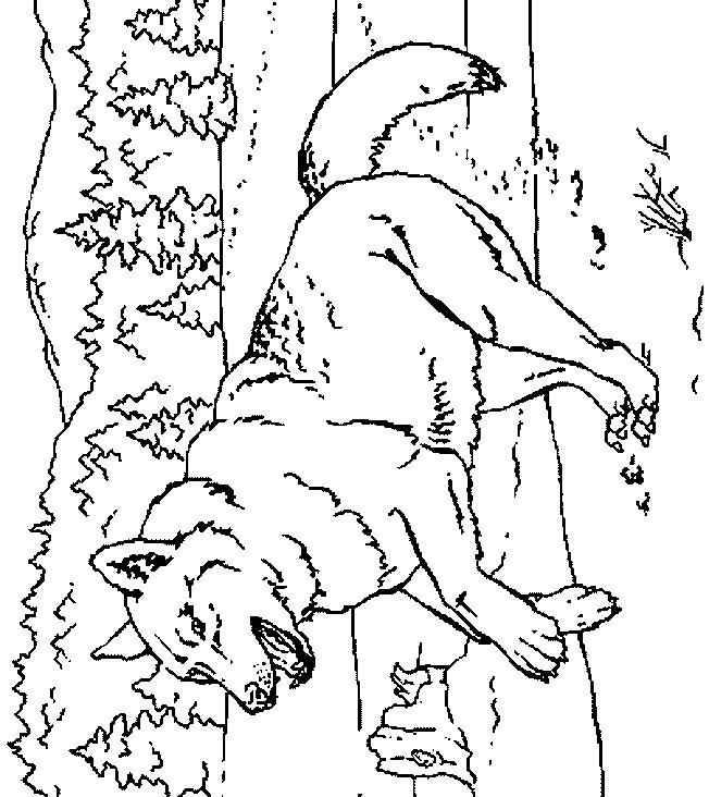 Coloriage et dessins gratuits Loup 23 à imprimer