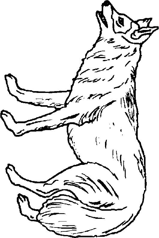 Coloriage et dessins gratuits Loup 24 à imprimer