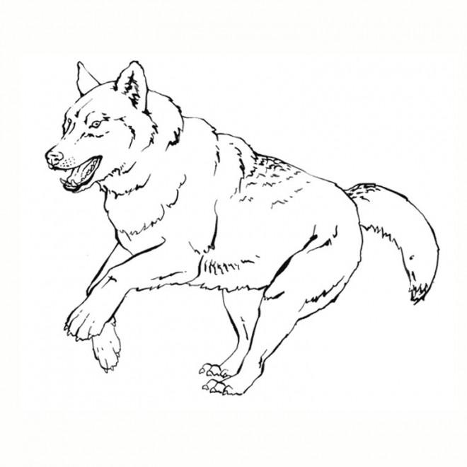 Coloriage et dessins gratuits Loup 3 à imprimer