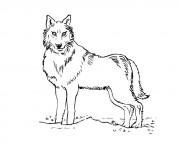 Coloriage et dessins gratuit Loup 5 à imprimer