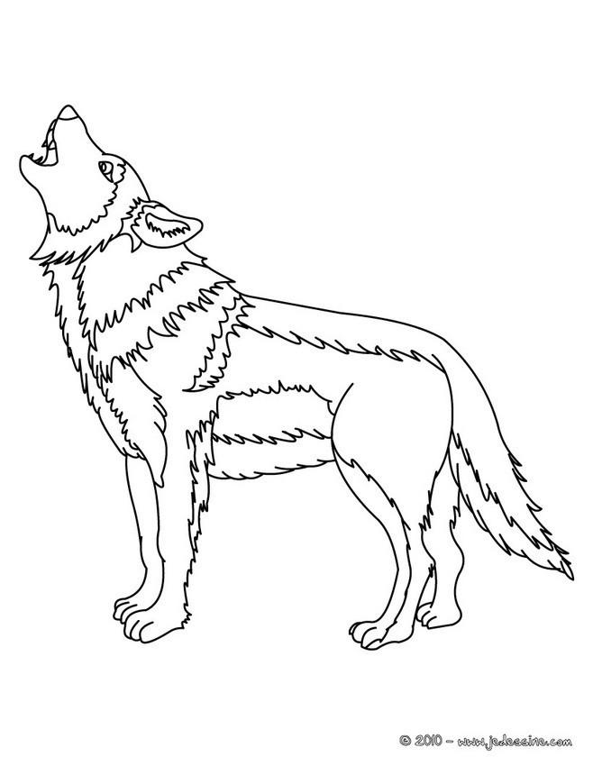 Coloriage Loup 8 Dessin Gratuit à Imprimer