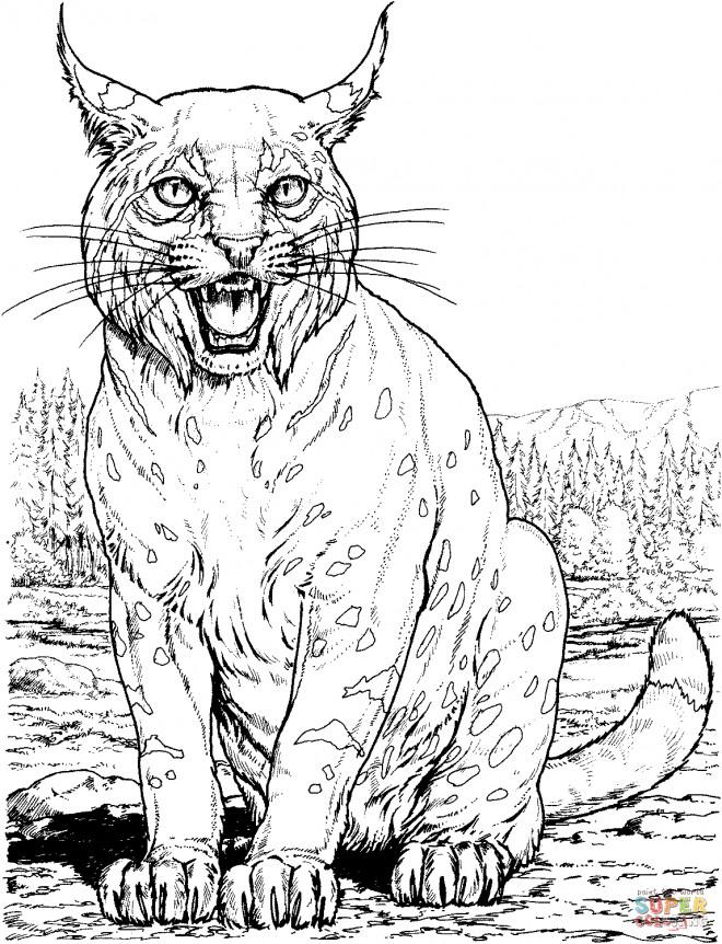 Coloriage et dessins gratuits Image de Lynx à imprimer