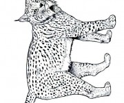 Coloriage dessin  Lynx 3