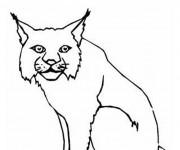 Coloriage dessin  Lynx 4