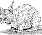 Coloriage dessin  Lynx 6