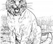 Coloriage dessin  Lynx 8