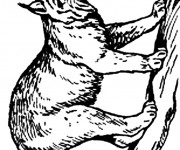 Coloriage Lynx au crayon