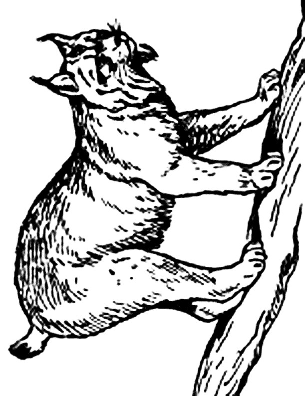 Coloriage Lynx au crayon dessin gratuit à imprimer