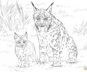 Coloriage Lynx et son bébé
