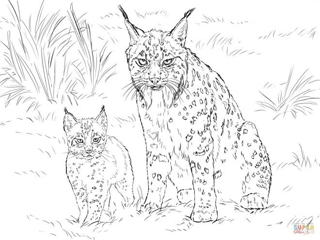 Coloriage et dessins gratuits Lynx et son bébé à imprimer