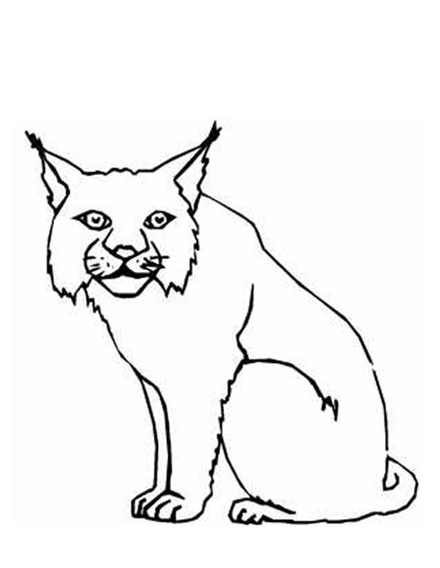 Coloriage et dessins gratuits Lynx facile à imprimer