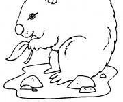 Coloriage dessin  Marmotte 3